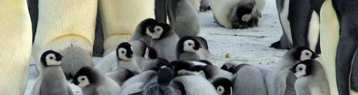 Penguins-and-rover